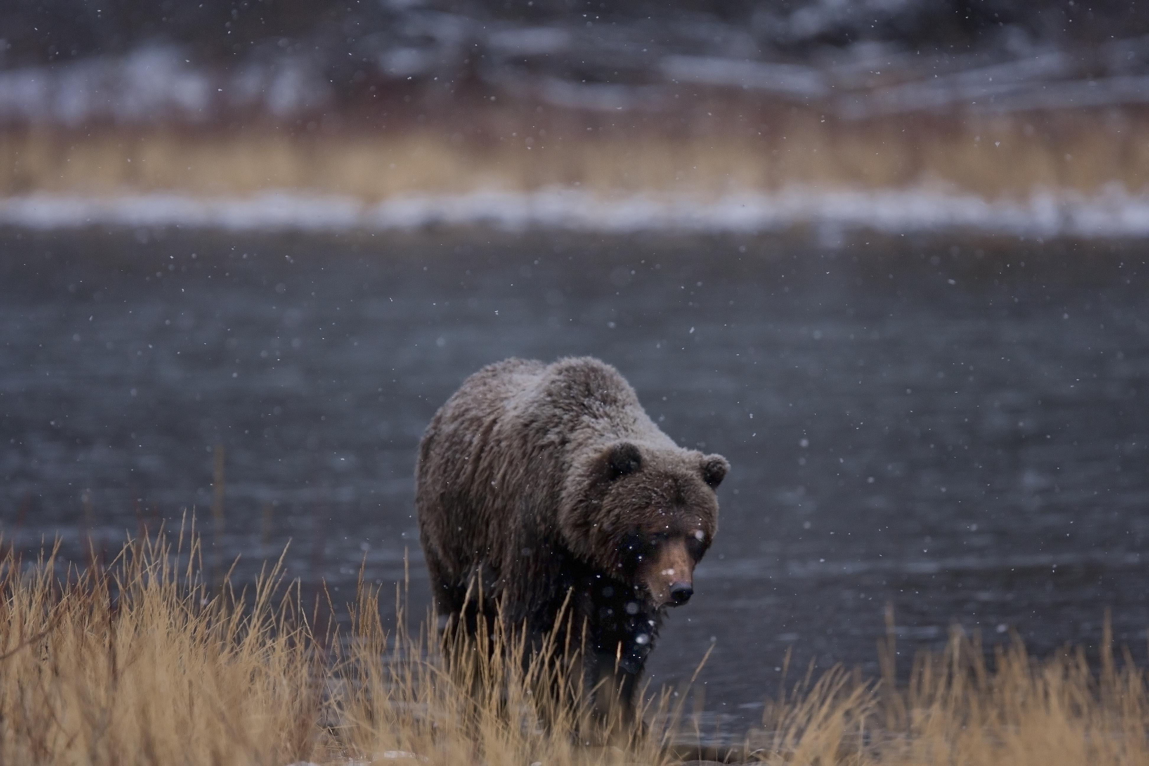 Ice bears kieran o 39 donovan for Snow bear ice fishing