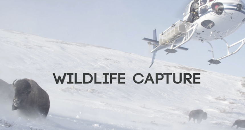Wildlife Capture